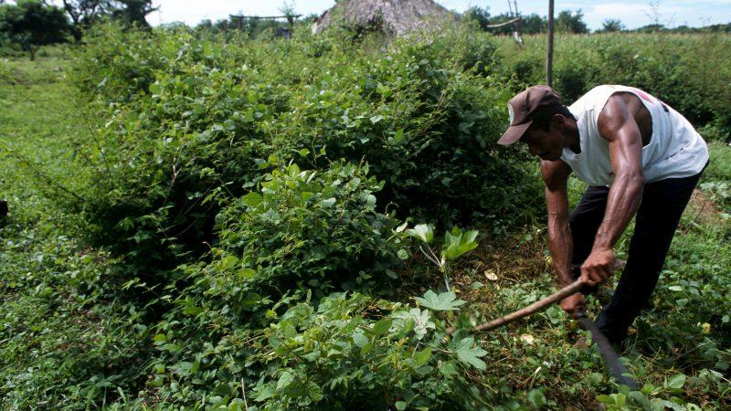 Nicaragua organiza conferencia regional de FAO Managua. Prensa Latina