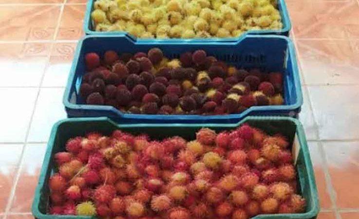 Feria de frutas exóticas en la ciudad de Bilwi Managua. Radio La Primerísima