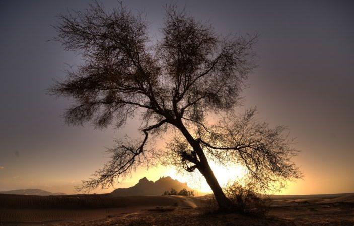 Descubren más de 1,000 millones de árboles en el desierto del Sahara Ciudad de México. Agencias
