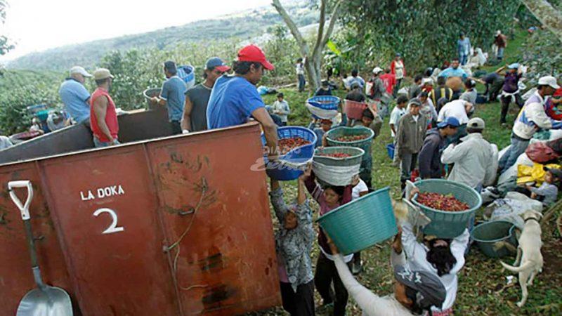 Costa Rica autoriza ingreso de nicas para levantar cosecha de café Managua. Radio La Primerísima