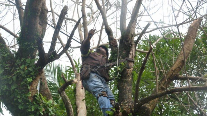 Restablecen mayoría de servicios de agua y electricidad Managua. Prensa Latina