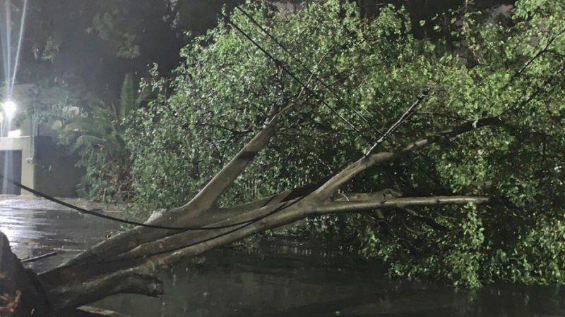 Familias resultan ilesas tras caída de árbol en Matagalpa Managua. Rebeca Flores/Radio La Primerísima