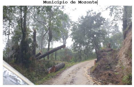 Lluvias derrumban árboles en Mozonte Managua. Jaime Mejía/Radio La Primerísima