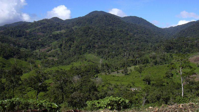 Fondo Verde aprueba fondos para proteger bosques Managua. Radio La Primerísima