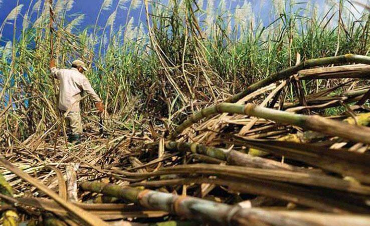 Zafra azucarera 2020-2021 generará 37 mil empleos Managua. Por Douglas Midence/Radio La Primerísima