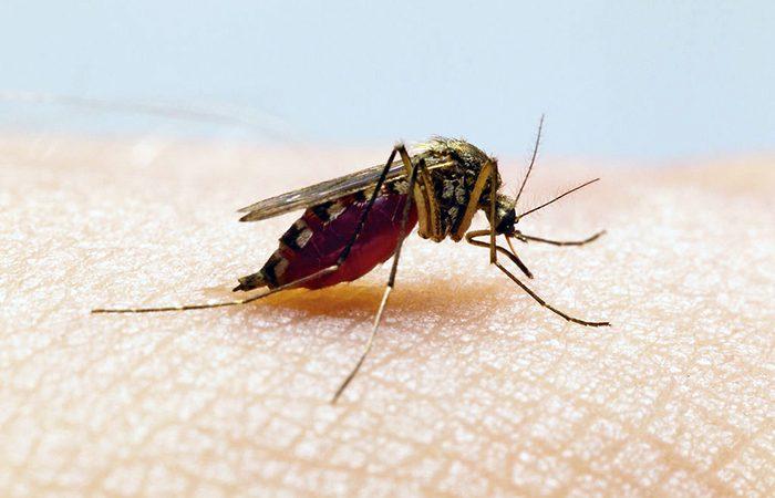 Disminuyen los casos de dengue durante los últimos siete días Managua. Radio La Primerísima