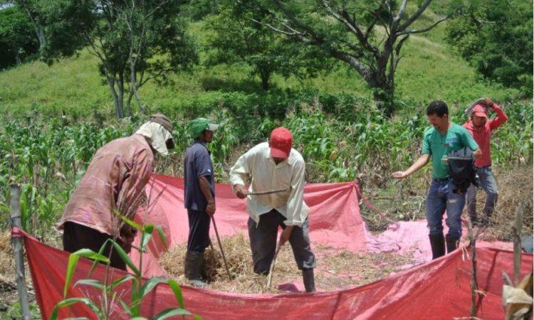 Frente frío ayudará a desarrollar siembra de apante Managua. Por Jaime Mejía/Radio La Primerísima