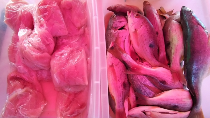 Sector pesquero exportó US$ 284 millones en 2020 Informe Pastrán