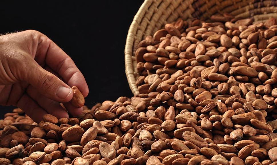 Países exportadores de cacao debaten definen rutas para 2021 Managua. Radio La Primerísima