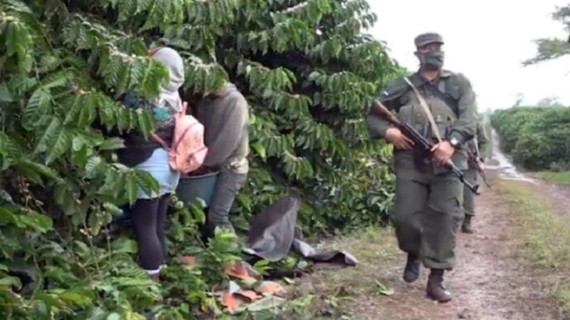Productores satisfechos con plan de protección de la cosecha Managua. Radio La Primerísima