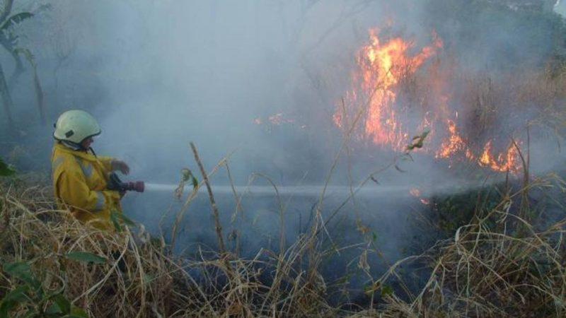 Especies protegidas de El Salvador en peligro por incendio San Salvador. Prensa Latina
