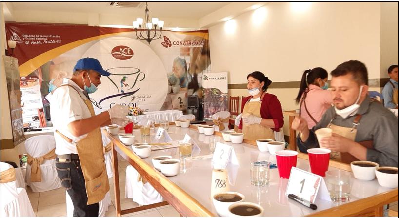 Inicia etapa de preselección para elegir los mejores cafés del país Managua. Radio La Primerísima
