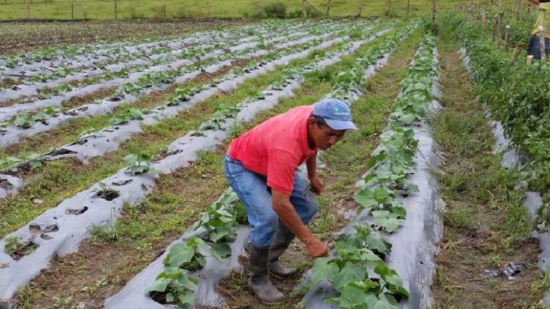 Gobierno presentará metas de producción 2021-2022 Managua. Radio La Primerísima
