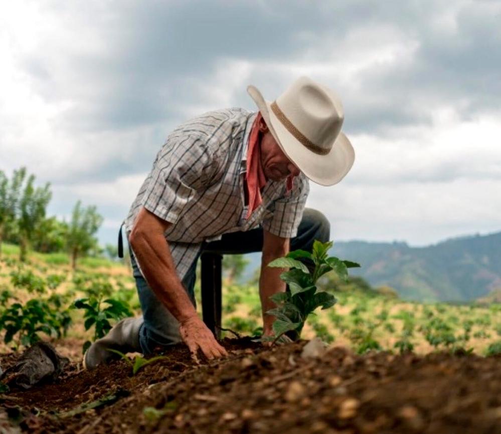 Listos bancos de semilla para siembra de primera Managua. Radio La Primerísima