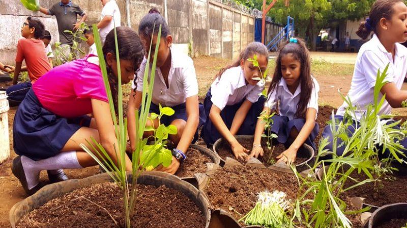 Instalarán huerto en una escuela el Distrito VII de Managua Managua. Por Libeth González/Radio La Primerísima