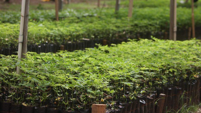 Inauguran vivero de plantas forestales en Ocotal Managua. Radio La Primerísima