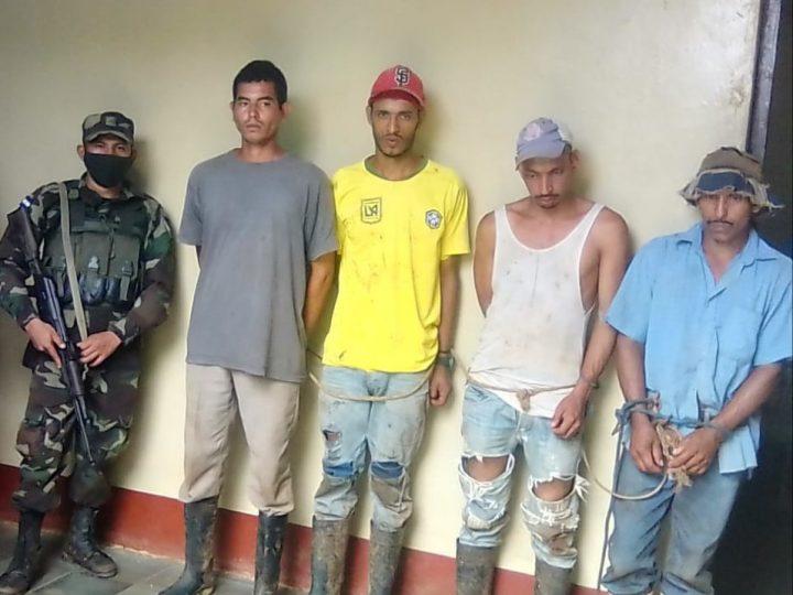 Ejército recupera 152 semovientes en el Caribe Sur