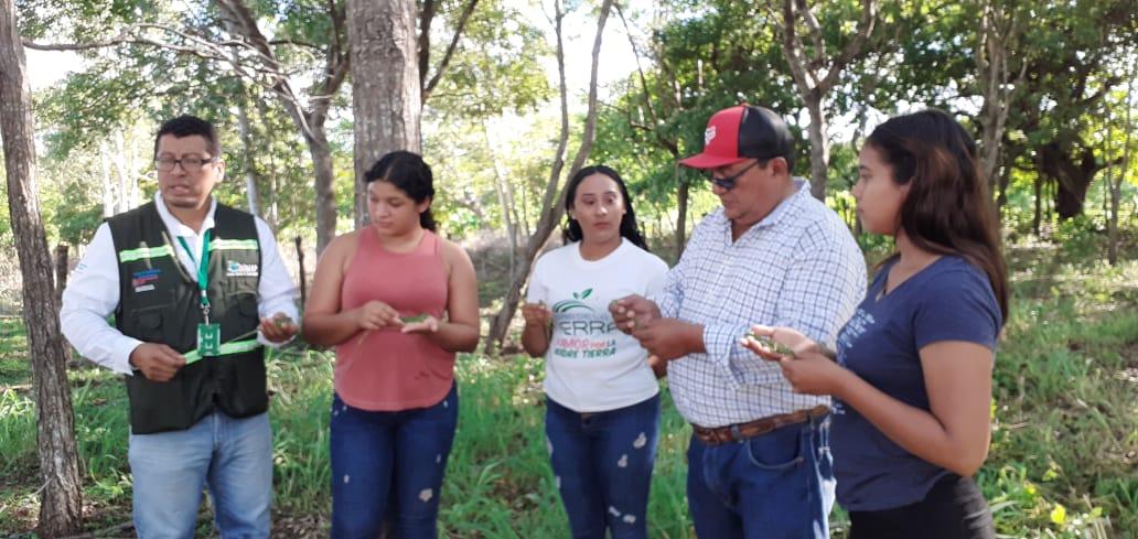 Liberan iguanas verdes en municipio La Conquista La Conquista. Manuel Aguilar/Radio La Primerísima