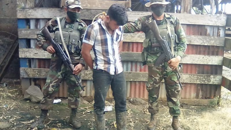 Ejército recupera 14 semovientes y un equino Managua. Radio La Primerísima