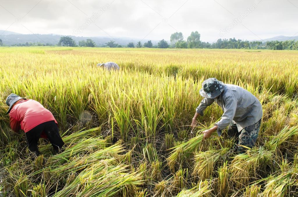 Corea ampliará apoyo a proyectos agropecuarios Managua. Libeth González/Radio La Primerísima