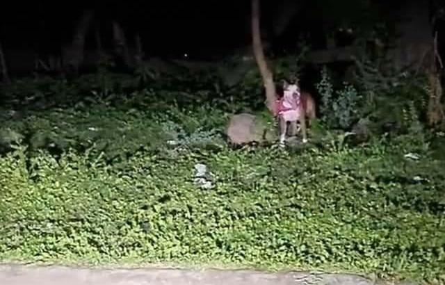 "Feroz perro ""Pitbull"" ataca a su dueño Managua. Por Ingrid Canda/Radio La Primerísima"