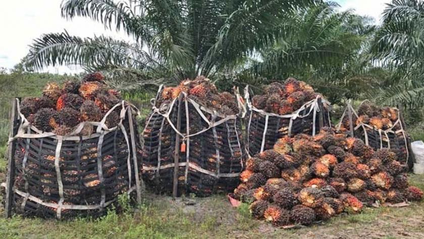 Exportan 10 mil toneladas de aceite Managua. Radio La Primerísima