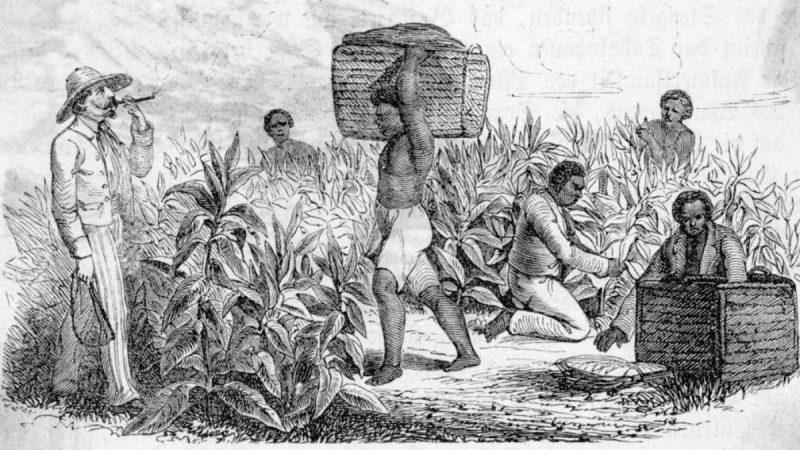 Capitalismo se erigió sobre el genocidio y los esclavos en América Por Jorge Molina Araneda | Agencia ALAI, Ecuador