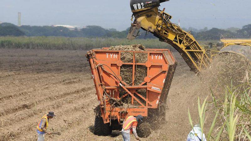 Azucareros espera producir 17 millones de quintales Managua. Radio La Primerísima